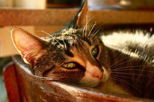 cat-725207_640