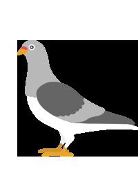 comprendre-google-pigeon